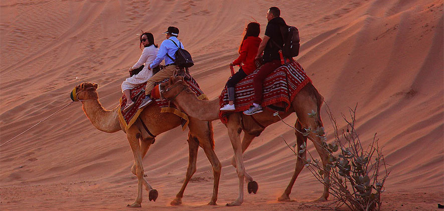 Things To Do in Rajasthan - Camel Ride