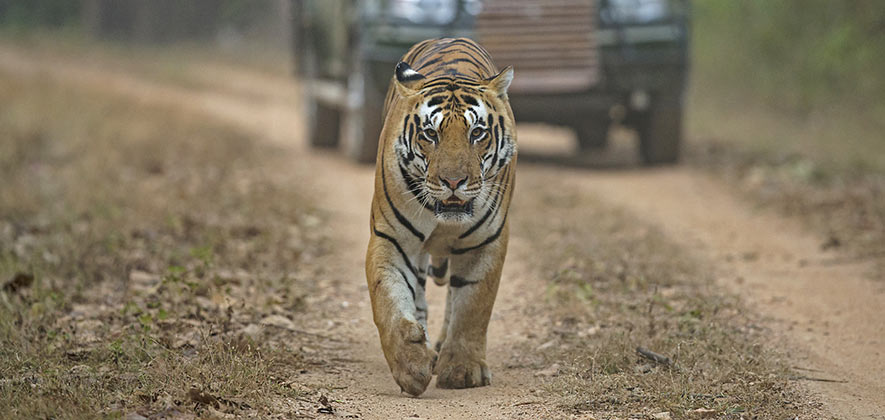 Things To Do in Rajasthan - Ranthambore Safari