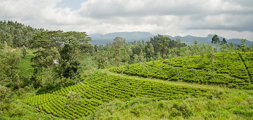 Nuwara Eliya - Must visit places in Sri Lanka