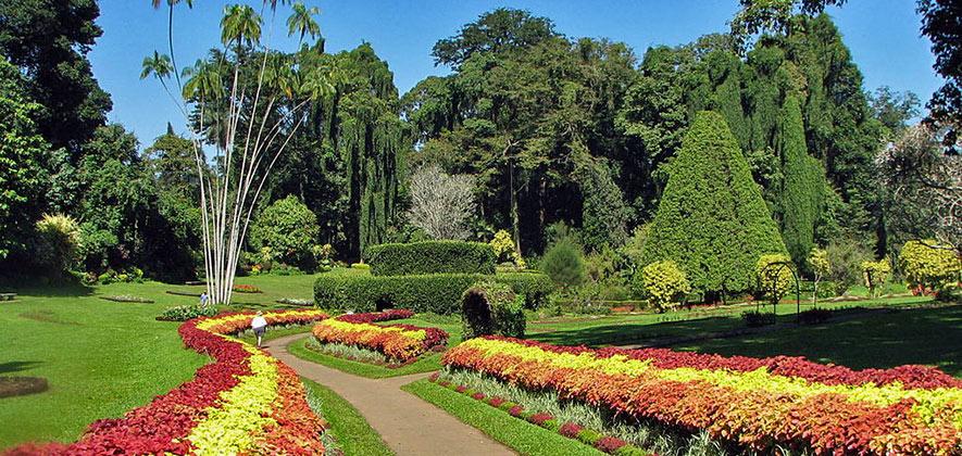 Things To Do in Kandy - Royal Botanical Garden Peradeniya