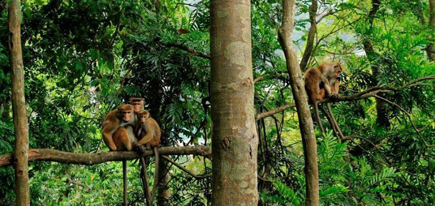Kandy Things To Do - Udawattakele Forest