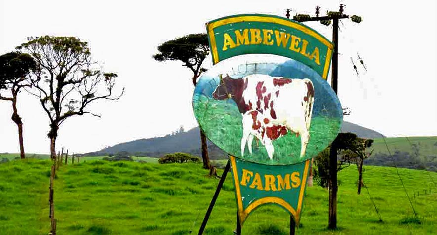 Things To Do in Nuwara Eliya - Ambewela Farm