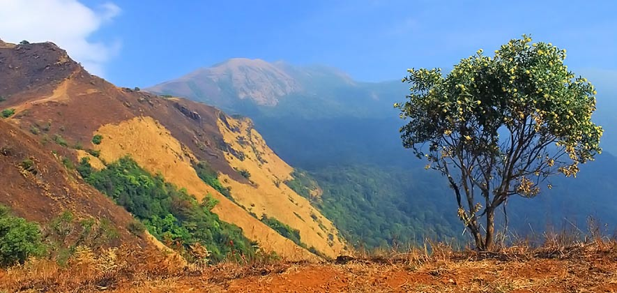 Best Places to Trek in Karnataka - Kodachadri Trek