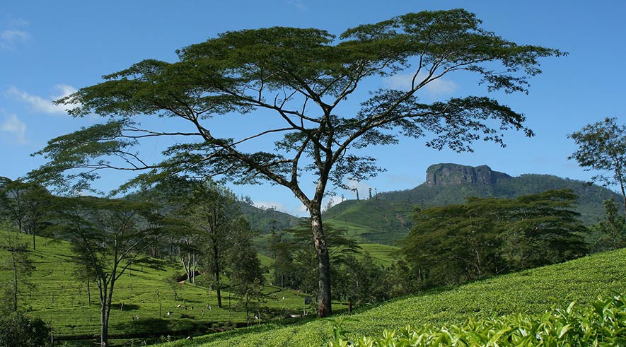 Things To Do in Nuwara Eliya - Galway's land National Park