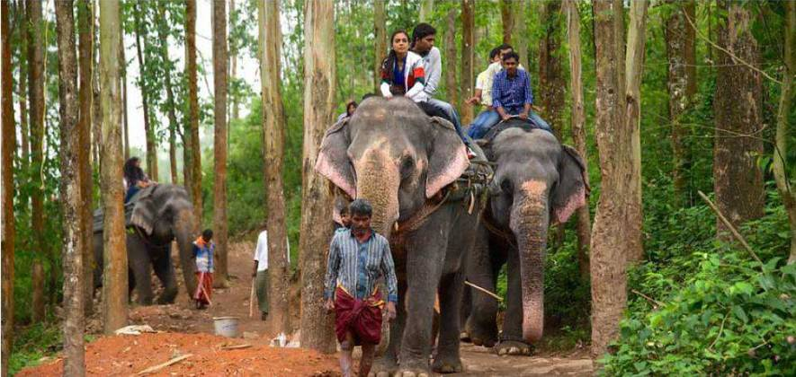 Ways Of An Elephant - Special Thekkady Day Tour