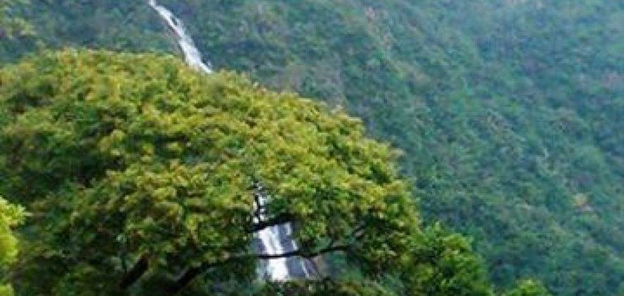 Nelliyampathy Hills Nature Non Guided Day Tour from Palakkad