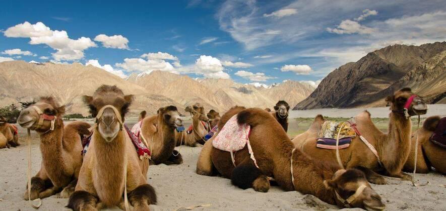 Ladakh Insight