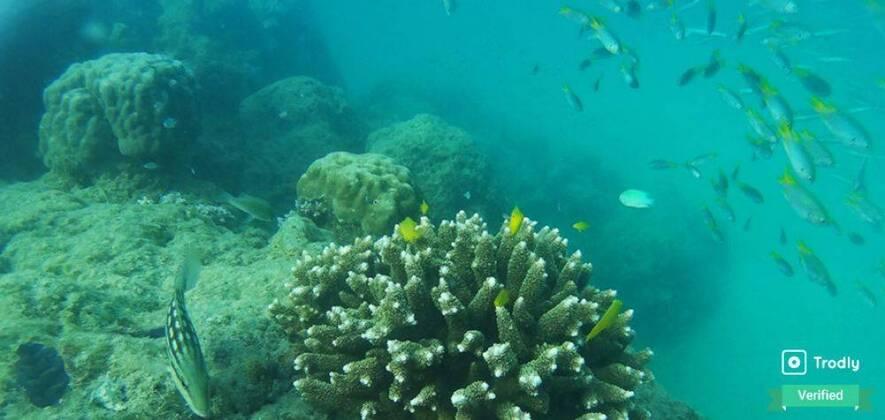 Scuba Diving at Havelock Island