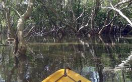 Kayak in Aguada Mangroves Goa