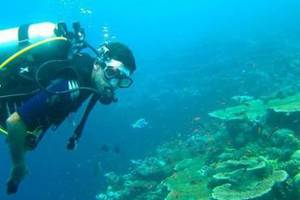 Why Goa is Perfect Place for First Time Scuba Divers