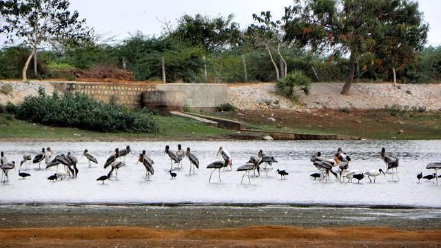 Koonthankulam Bird Sanctuary, Tamil Nadu