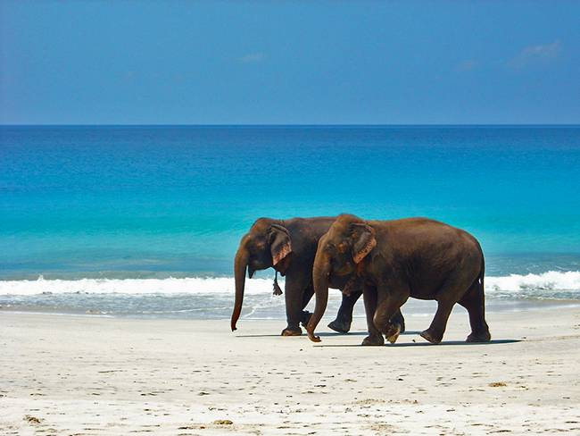Elephant beach - Places To Visit In The Andaman