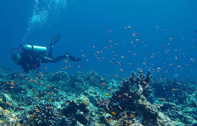 Scuba Diving in Andamans - Places To Visit In The Andaman