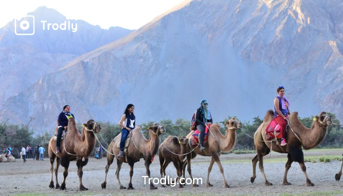 Camle safari nubra valley Trodly group