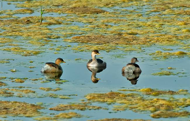 UNESCO Natural World Heritage Sites India: Bharatpur