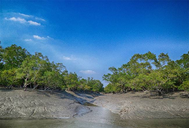 UNESCO Natural World Heritage Sites India: Sundarbans