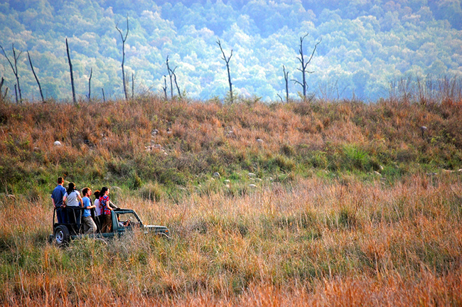 Off the Beaten Path Honeymoon Destinations India : Corbett National Park
