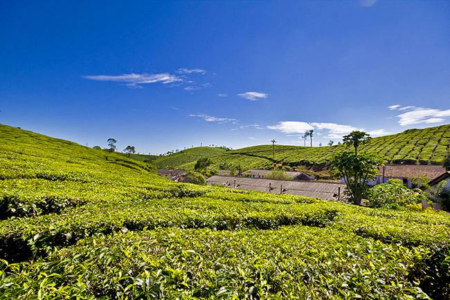 Hill Stations of South India: Vagamon Hill station