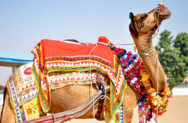 Places to Visit in Rajasthan - Pushkar
