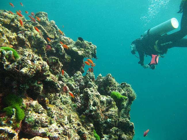 Adventures in India: Scuba Diving in Andamans