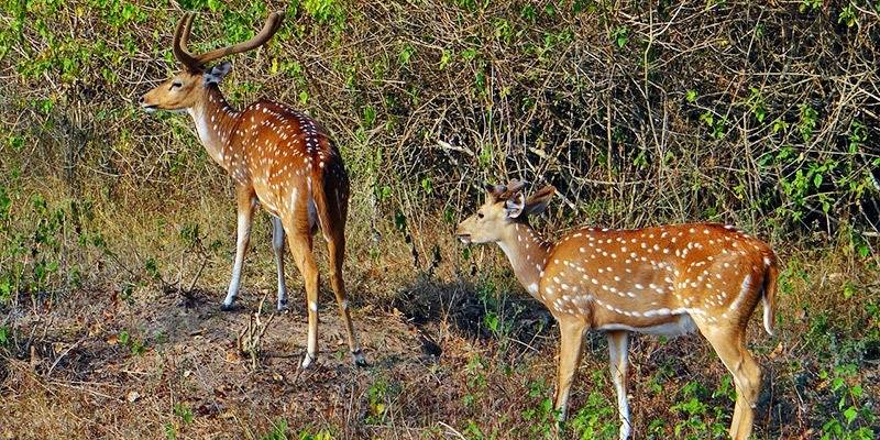 Weekend Getaways from Bangalore - Bandipur National Park