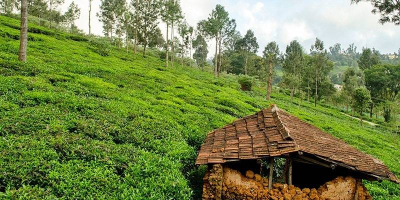 Weekend Getaways from Bangalore - Ooty