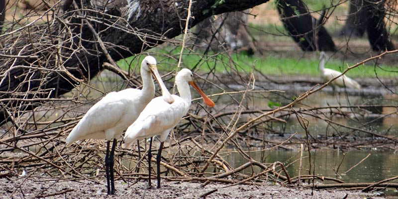 Kokkare Bellur Bird Sanctuary
