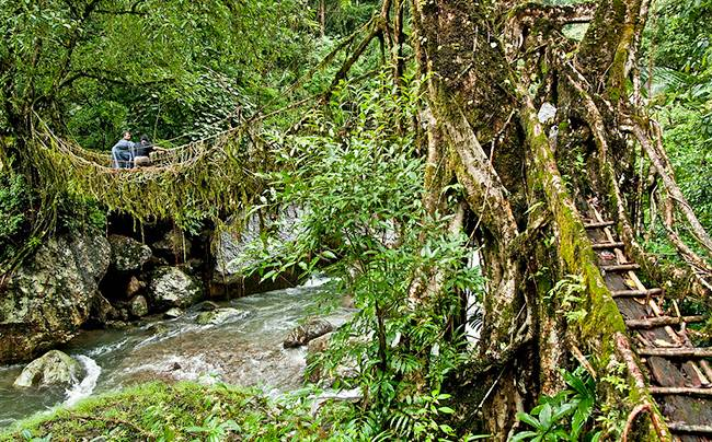 Living Root Bridges | Cherrapunjee