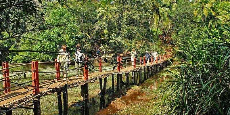 Goa Things To Do - Spice Plantations in Goa