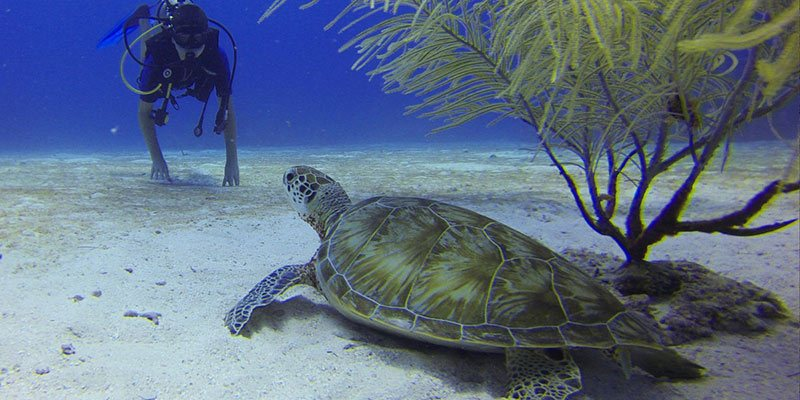 Goa for First Time Scuba Divers - Marine Life Corals