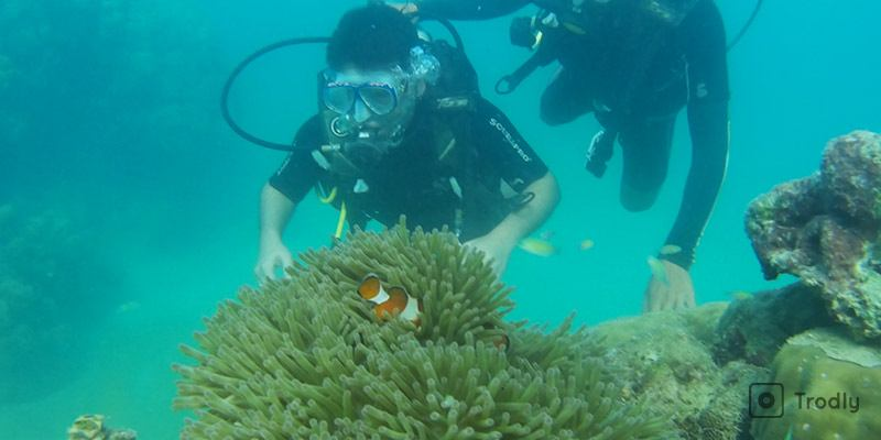 Things To Do in Havelock Island - Scuba Diving