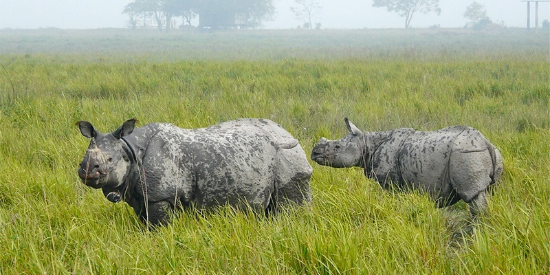 Places to Visit in India in December: Kaziranga national par, assam