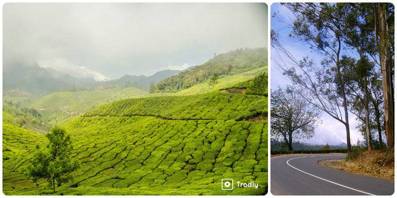 Road Trips in India - Bangalore - Munnar