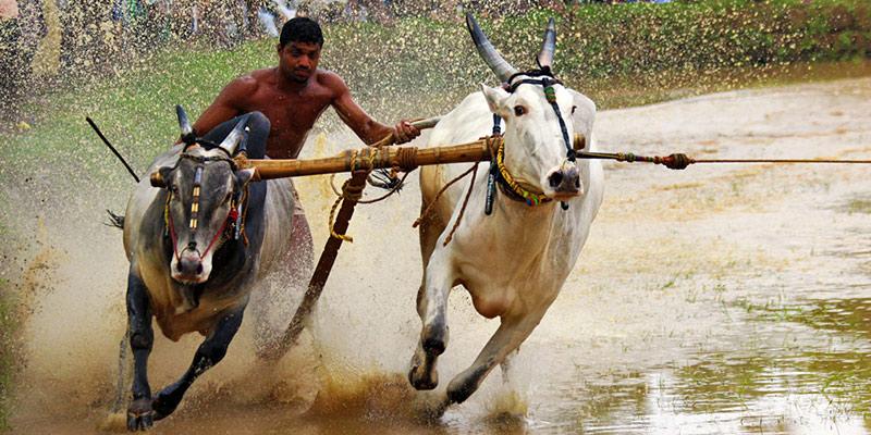 Kerala - Keyhole View of God's Own Country - Maramadi