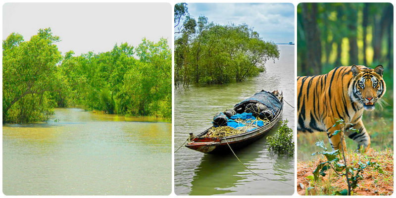 Best Road Trips from Kolkata - Sundarbans