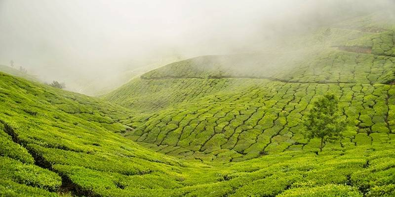 Monsoon destinations in India : Munnar