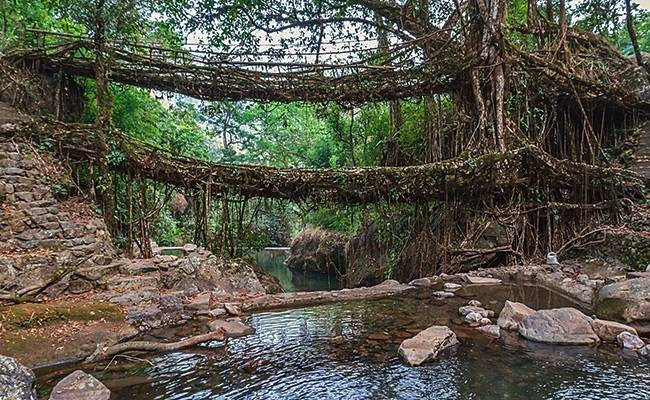 Natural Wonders of India: Living Root Bridges, Cheerapunji