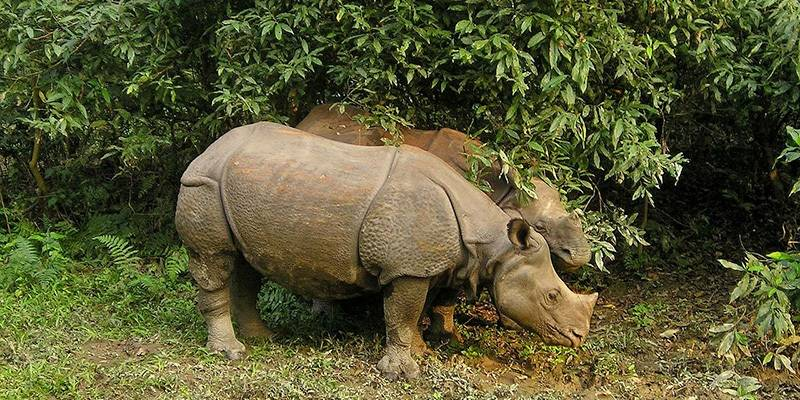 Ultimate Travel Guide to Nepal - Chitwan National Park