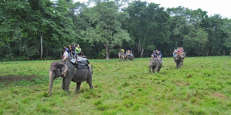 Ultimate Travel Guide to Nepal - Jungle Safari Chitwan National Park