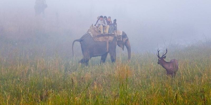 New year places from New Delhi - Jim Corbet National Park