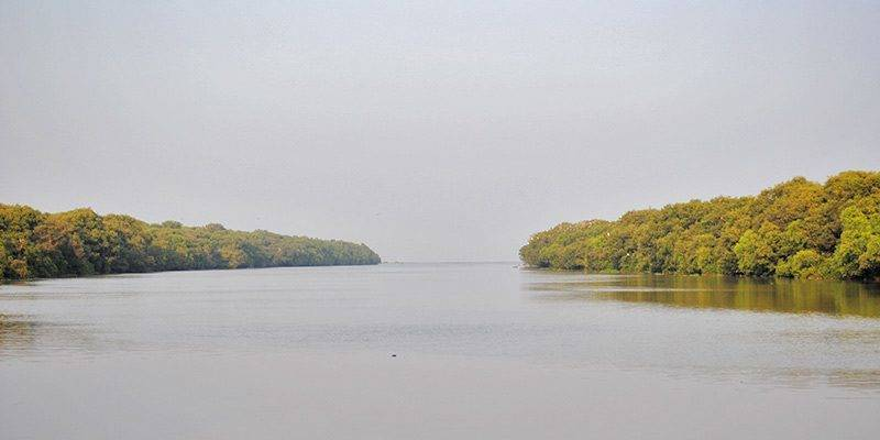 Offbeat Places to Visit in Andhra Pradesh - Coringa Wildlife Sanctuary