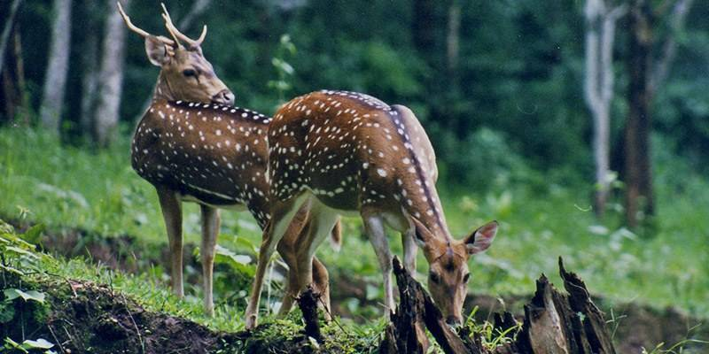 Offbeat Places in Goa - Cotigao Wildlife Sanctuary