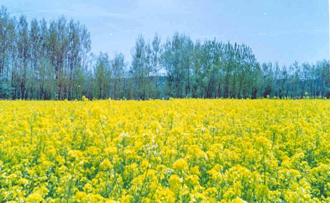 Offbeat Places to Visit in Jammu and Kashmir: Pulwama