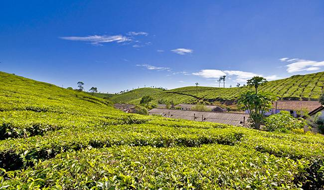 kerala offbeat vagamon
