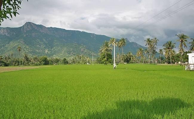 Javadi Hills - Offbeat Tamil Nadu