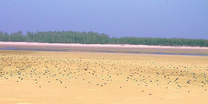 offbeat places in West Bengal: Tajpur