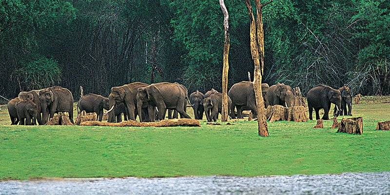 Activities To Experience In Kerala - Periyar Thekkady