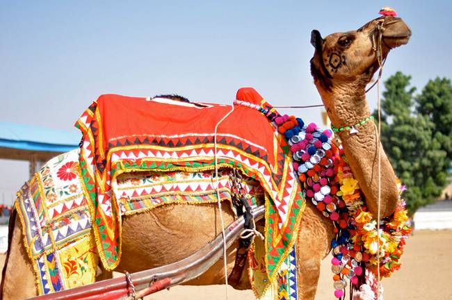 Camel Trading at Pushkar Camel Fair