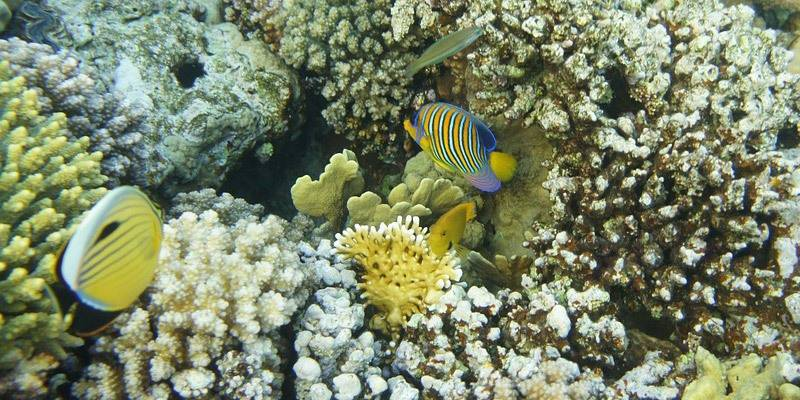 Andamans Coral Reefs & Coral Walls - Scuba Diving in Andamans