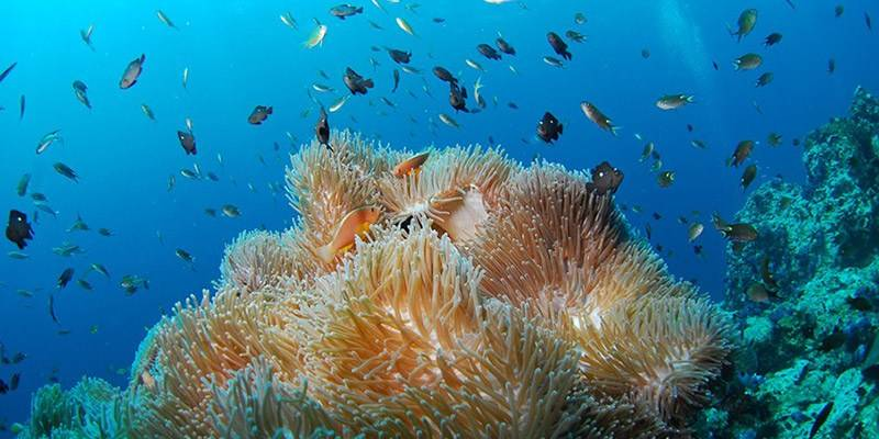 Andamans Marine Life - Scuba Diving Destination in India
